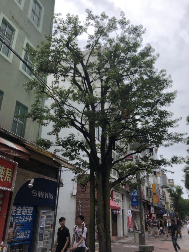 イセザキモール シンボルツリー